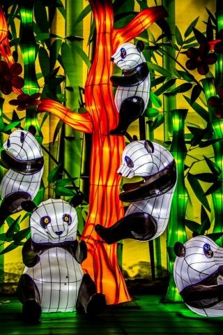 Panda display at Chinese Lantern Festival